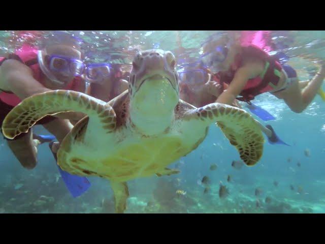 Tour Snorkel   Xcaret México! Cancún Eco Park