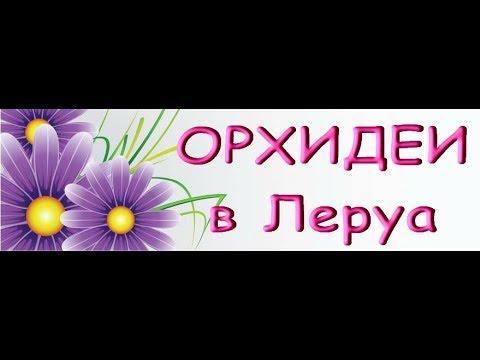 ЗАВОЗ прекрасных ОРХИДЕЙ в ЛЕРУА,есть Попугаи!15.11.19.