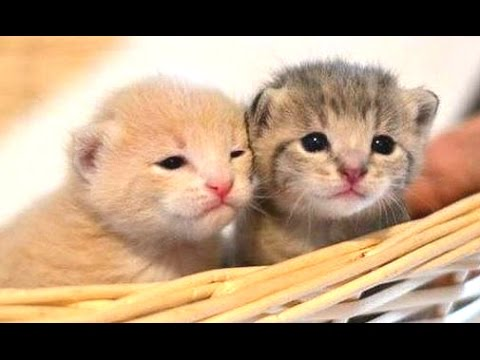 Funny Cats ECards Cute kittens doing funny things will always going..