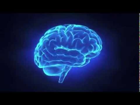 Das Wunderwerk Gehirn