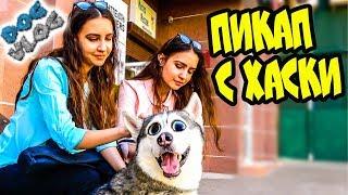 DOGVLOG: КАК ЗНАКОМИТЬСЯ с ДЕВУШКАМИ ИСПОЛЬЗУЯ ХАСКИ. Говорящая собака