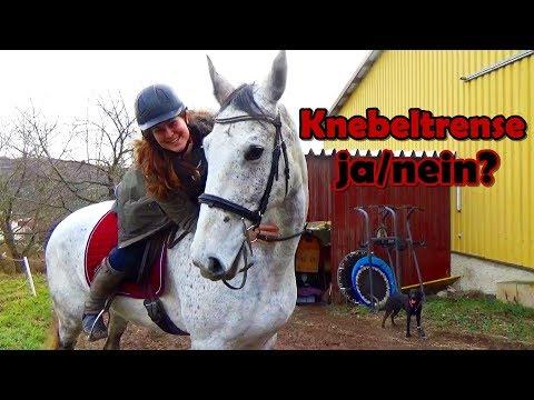 🦄 Pferd mit Knebeltrense reiten 🦄