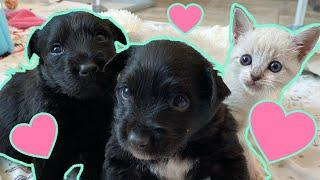 Little Kitten Raised With Puppies