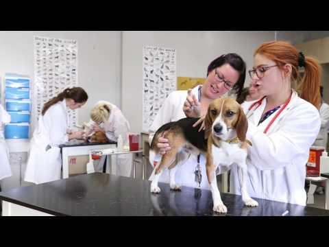 DEC | Techniques de santé animale