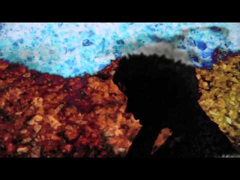 Ulises Hadjis - Dónde Va (Video Oficial)