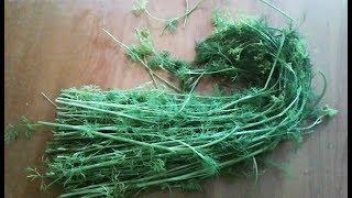 Не выкидывайте стебли укропа! Их можно использовать