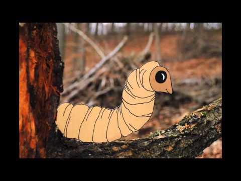 Von den Würmern dem Kind die Würmer