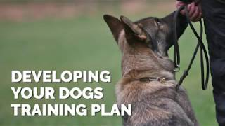 Developing Your Dogs Training Plan