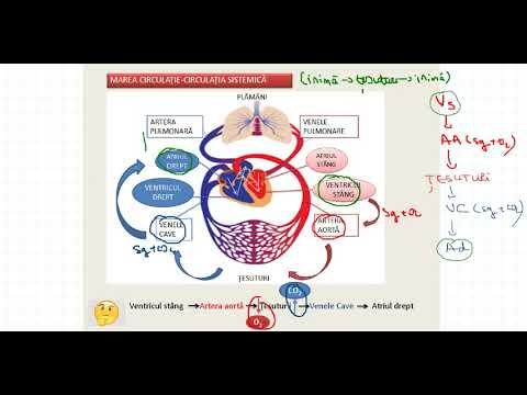 Medicamente artroza tratamentului articulațiilor umărului