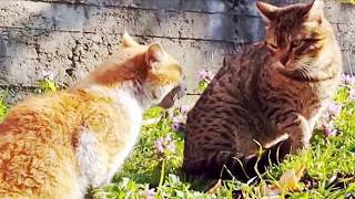 *FUNNY* Cats and Dogs Compilation 2019- Funny Daily Pet Videos #7