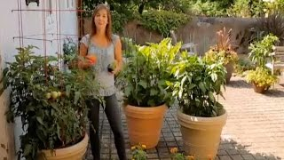 How to Grow Container Tomatoes, Peppers and Eggplants
