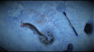 Ловля щуки зимой на р.амур