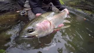 Fly Fishing For Steelhead In Washington & Oregon