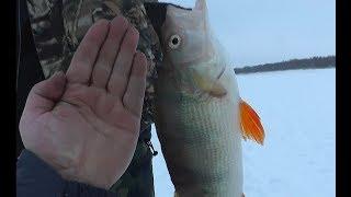 Зимняя рыбалка на щуку, НО на новый способ ловли на летний спиннинг