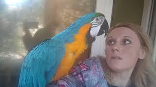 Попугай ара впервые на балконе