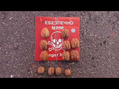 Сравнение размера ореха Яцек и Кочерженко, Идеал.