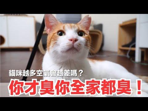 好味小姐-家裡添加一台空氣清淨機,貓咪生活品質又上升一大步