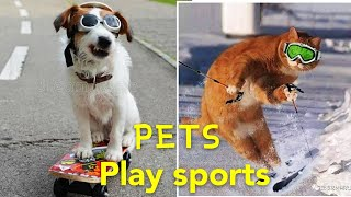 Amazing!!! These Cute and Cool Dogs are Really Good at Sports ! 2020 Ha-Ha Pets