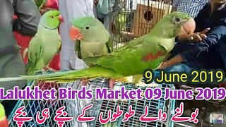 Birds Breeding Tips - karachi lalukhet birds sunday market | birds