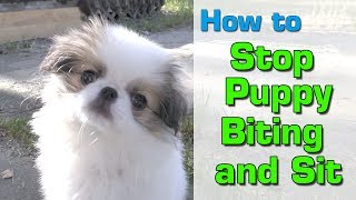 PUPPY TRAINING: Stop Biting & SIT Lessons for a 10 week old Puppy