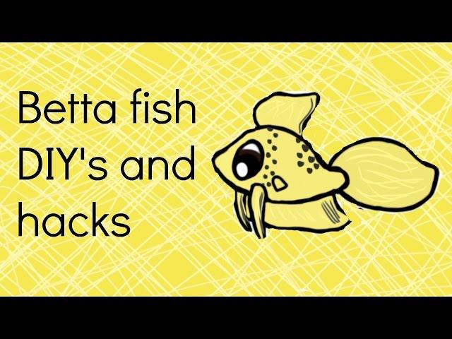 Simple Betta fish DIY's and hacks Collab!