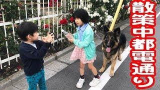 シェパード犬子供達都電通り散策散歩チンチン電車が走る街German Shepherd Dog