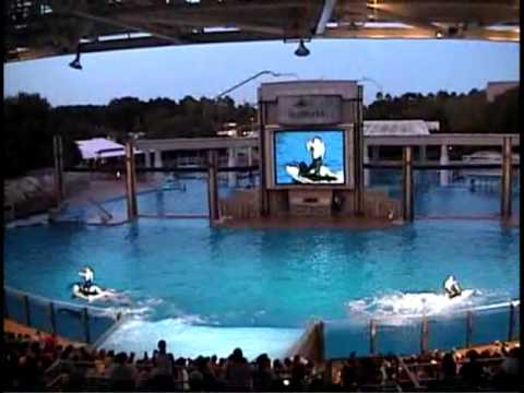 Sea World Orlando Shamu Rocks August 2003