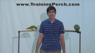Parrot Training Stands - Perches for Teaching Parrot Tricks