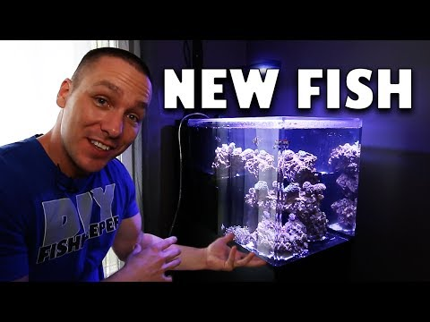 I bought NEW FISH and CORAL!! aquarium update