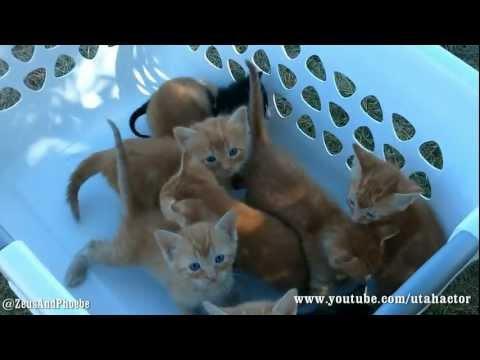 Basket of Meowing Kittens