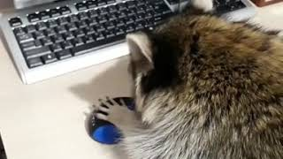 Нападение на мышку.