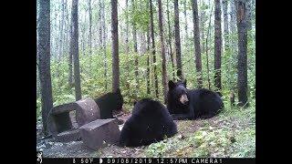 Baiting Bear 2019 Wisconsin Hunt Zone D