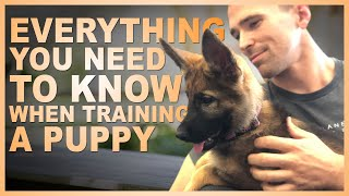 Everything You Need to Know When Training Your Puppy.