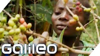 Wird alles teurer!? Was wäre, wenn es nur noch Fair Trade Produkte geben würde?   Galileo