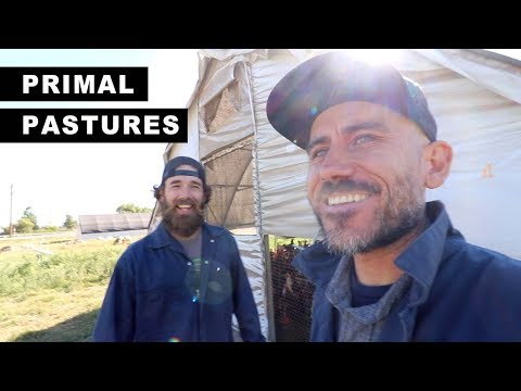 The FARM that INSPIRED US | PRIMAL PASTURES