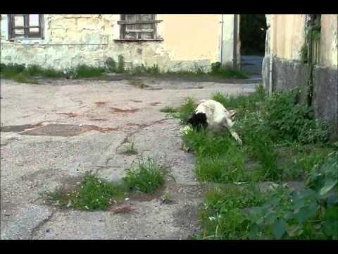 Licola, il casino Borbonico da Reale delizia a ricovero per cani