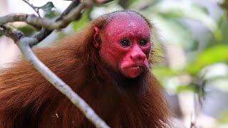 16 Strangest Monkey Species On Earth