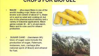preview picture of video 'Biodiesel Manufacturers | Jatropha Seed Buyer | Biodiesel in India'