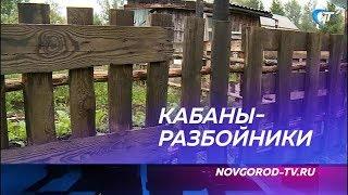 В Новгородской области решено уничтожить почти 3 тысячи кабанов