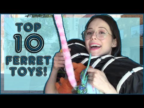 , title : 'TOP 10 FERRET TOYS!