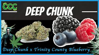DEEP CHUNK x TRINITY COUNTY BLUEBERRY | Strain review by The Cannabis Connoisseur Connection 420