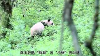熊貓淘淘 (Tao Tao Panda)