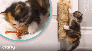 adorable-low-budget-diy-cat-toys