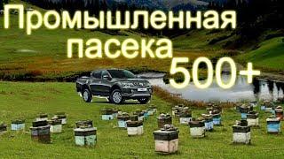 Промышленная пасека Белоруси в 500 семей /часть 2
