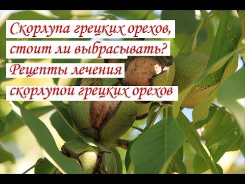 Скорлупа грецких орехов, стоит ли выбрасывать Рецепты лечения скорлупой грецких орехов видео