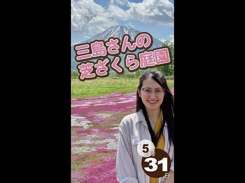 【桜】北海道ニセコからおはよー!<2021年5月31日>|毎週月曜朝8時、ニセコから元気をお届け!