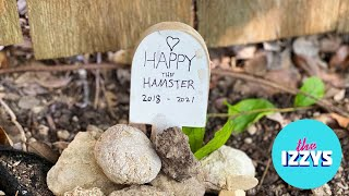 Happy the Hamster: The End of an Era (Plus an Important Update About Snowy)
