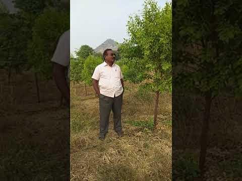 RED SANDAL WOOD PLANTATION--CH VIDYA SAGARREDDY - смотреть