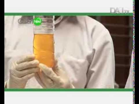 Video Biodiesel Biji Randu