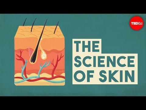 סרטון הסבר על תפקידיו החשובים של העור